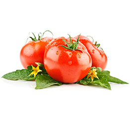 Tomato producers in Italy